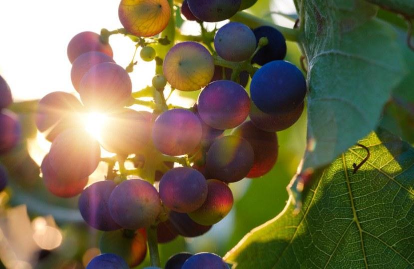 Wines with denomination of origin Empordà