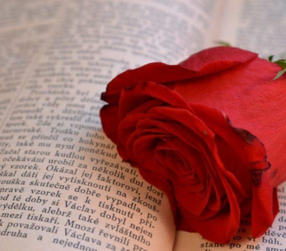 Diada de Sant Jordi – April 2020